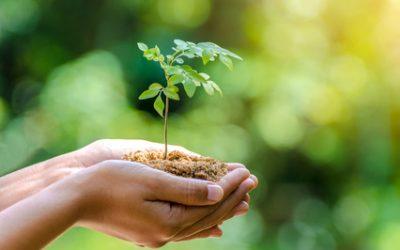 Die Samen… oder der Mut zum Wachsen